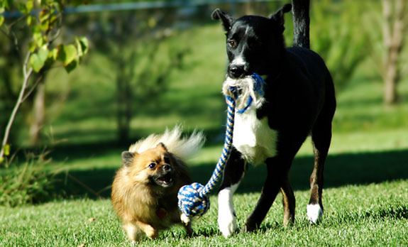 Sw Florida Professional Dog Trainers